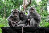 monkey-sanctuary-ubud-bali
