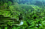 Ubud-Bali-holiday-Deals