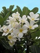 Fleurs de Ti panier