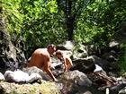 bain dans la riviere