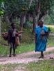 les femmes reviennent des champs, chargées de bois et de légumes, la machette à la main, toujours